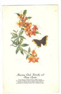 AS: Mourning Cloak Butterfly and Flame Azalea, Peterson, 10-20s