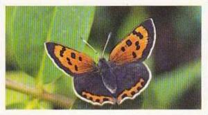 Grandee Vintage Cigarette Card British Butterflies 1984 No 21 Small Copper