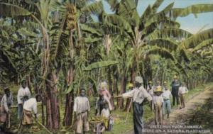 Jamaica Native Workers On A Banana Plantation