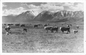 Cattle Ranch Nevada Frasher RPPC Photo Postcard 20-4812