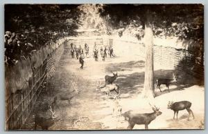 Real Photo Postcard~Crowd Watches Men & Deer Fight in Pit~Chairs~Ropes~1918 RPPC