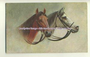 an0637 - Portraits of Gray & Chestnut Geldings in Tack, Artist - U/K - postcard