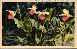 Minnesota State Flower The Showy Lady's Slipper Curteich