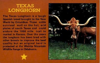 Texas Long Horn Misc TX Unused