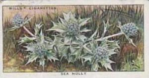 Wills Vintage Cigarette Card The Sea-Shore No 50 Sea Holly  1938