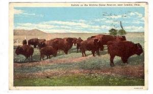 Buffalo on the Wichita Game Reserve, near Lawton, Oklahoma, PU-1954