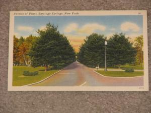 Ave. of Pines, Saratoga Springs, N.Y., unused vintage card, has some corner wear