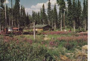 Log Cabin in August , N.W.T. , Canada , 50-70s