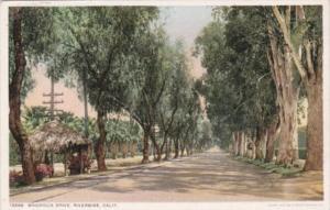 California Riverside Magnolia Drive Detroit Publishing