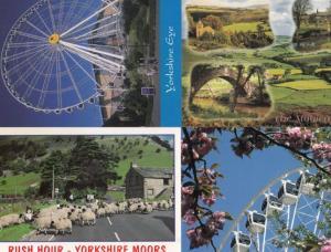 The Yorkshire Eye Wheel Magic Of The Moors Rush Hour Sheep 4x Superb Postcard s