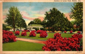 Alabama Mobile Azaleas In Lyons Park 1957 Curteich