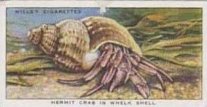 Wills Vintage Cigarette Card The Sea-Shore No 31 Hermit Crab In Whelk Shell  ...