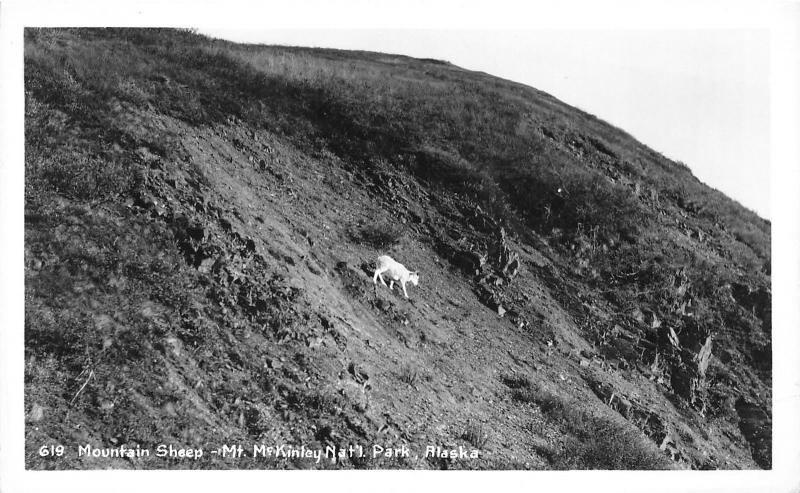Mount McKinley/Denali National Park Alaska~Mountain Sheep on Hillside~1940s RPPC