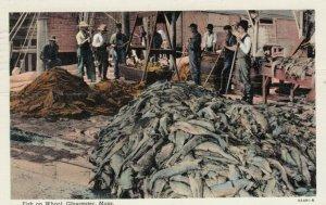 GLOUCESTER , Mass. , 1910-30s ; Fish on Wharf