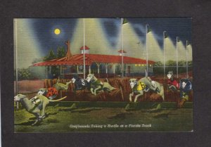 FL Greyhound Dog Racing Track Dogs Linen Postcard PC