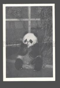081159 Lonely PANDA in ZOO Old Photo PC