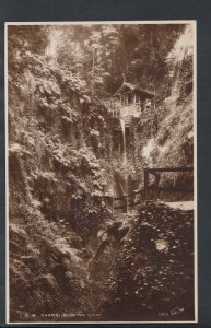 Isle of Wight Postcard - Shanklin - In The Chine    RS5972