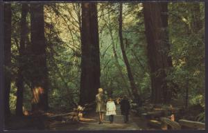 Muir Woods National Monument,CA