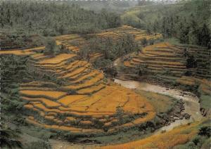 Indonesia The Farms are also Gifted Artists in Bali River Landscape
