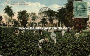 cuba, Vega de Tabaco, Tobacco Plantation (1919)