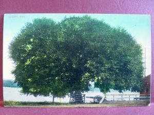 Old Postcard  Le Claire IA