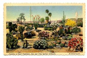 CA - Palm Springs. Desert Vegetation