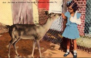 Virginia Roanoke Pet Deer At Children's Zoo On Mill Mountain