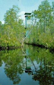 Georgia Waycross Okefenokee Swamp Park 90 Foot Observation Tower
