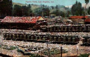 California Los Angeles Pigeon Farm 1909