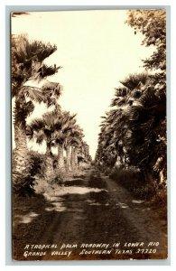 Vintage 1939 RPPC Postcard Tropical Palm Road Rio Grande Valley Weslaco Texas
