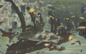 MARINELAND, Florida, 30-40s; Sharks and Shipwrecks, Marine Studios
