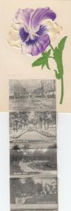 PETERBORO , Ontario, Canada , 1900-10s Pansy Flower Pop-out views