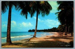 Postcard Luquillo Beach Puerto Rico c1960s Palm Trees