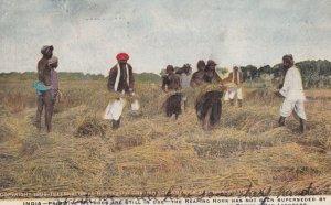INDIA , 1909 ; International Harvest AD postcard
