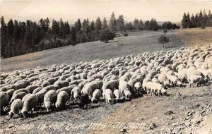 F14/ Blue Mountains Oregon RPPC Postcard Beaverton 1947 Sheep Farm