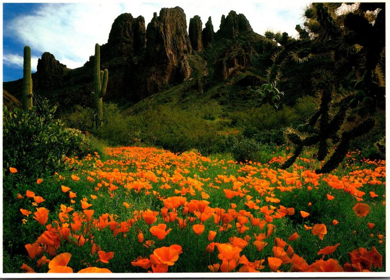 Arizona Organ Pipe National Monument With Mexican Gold Poppies and Saguaro Ca...