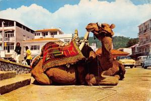 Turkey Deve The fantastic animal Camel