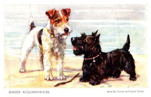 Dog , Wire Fox Terrier and SCotch Terrier