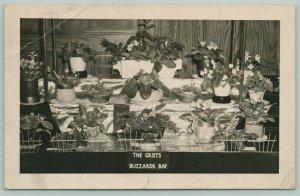 Buzzards Bay MA~Flower Show: African Violets~Special Award~The Grists~1950 RPPC