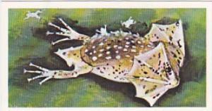 Brooke Bond Vintage Trade Card Wonders Of Wildlife 1976 No 29 Surinam Toad Hi...