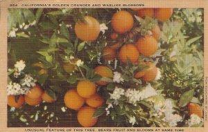California's Golden Oranges and Waxlike Blossoms Vintage Linen Postcard