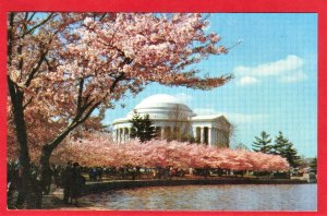 JEFFERSON MEMORIAL, CHERRY TREES ARE IN BLOSSOM. WASHINGTON D.C. SEE SCAN  PC87