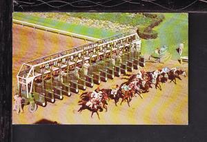 Start of Race,Hialeah Race Course,Miami,FL Postcard