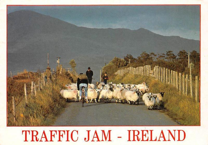 Ireland Traffic Jam Cyclist Sheeps Shepherd