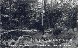 Marquette, Michigan, USA Bear 1940 postal used 1940
