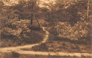 B105425 Netherlands Zeist Boschgezicht Forest Path Promeande