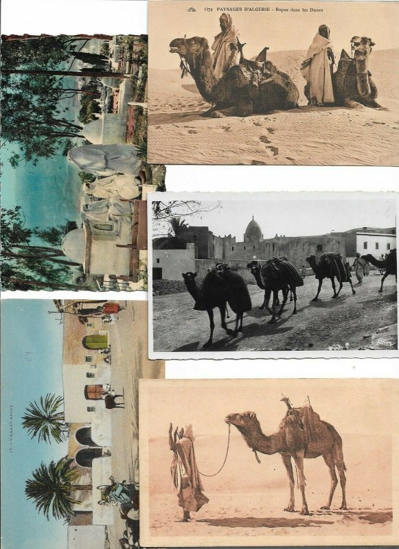 North Africa Morocco, Algeria Tunisia Egypt Postcard lot of 15 01.12