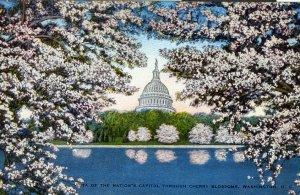 [ Linen ] US Washington, D.C. - Capitol Through Cherry Blossoms