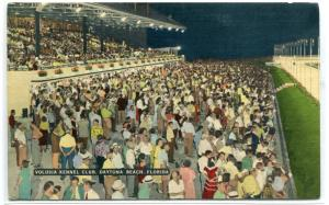Greyhound Dog Racing Grandstand Crowd Daytona Beach Florida linen postcard
