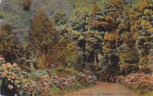 The Drive To Porvacao, St. Michael's, Azores, Portugal, 1900-1910s